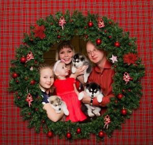 4 А, семья Мишаковой Лизы со щенками хаски